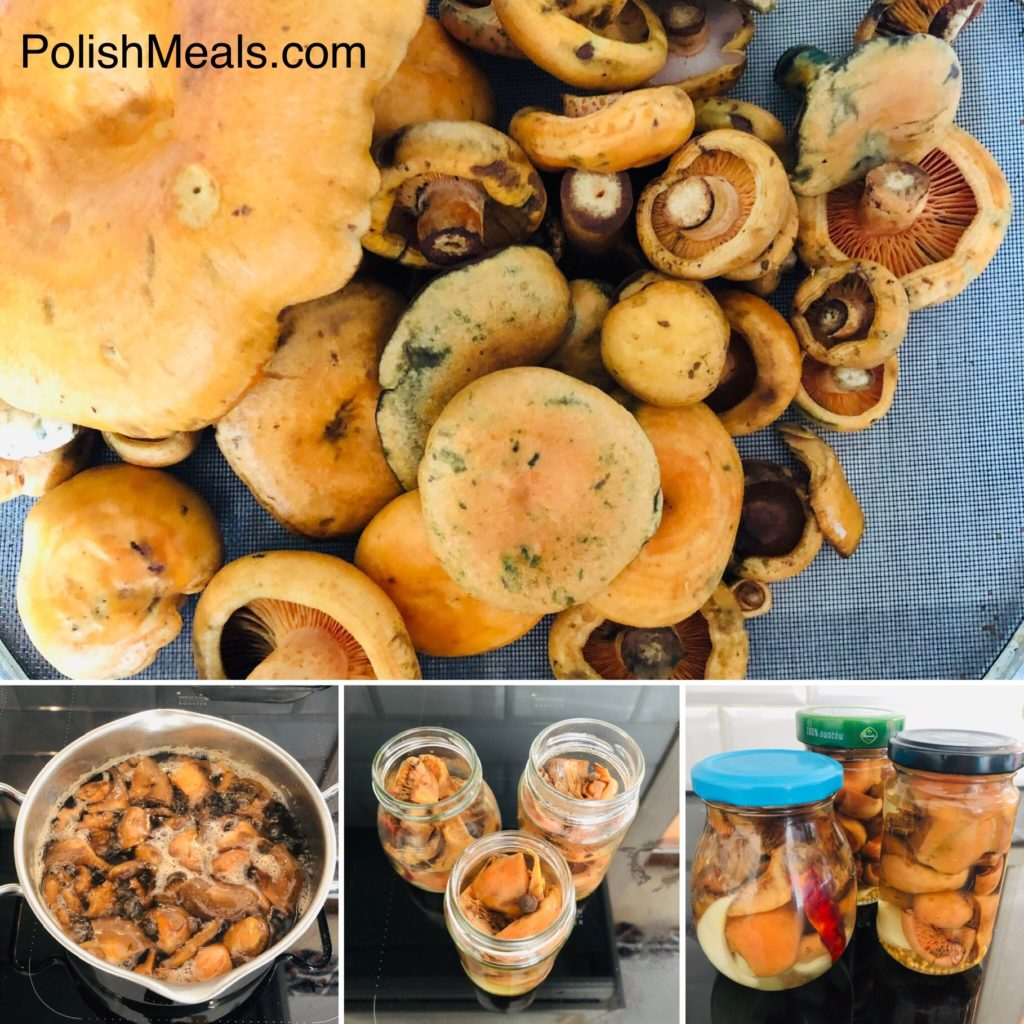 pickled orange milk mushroom recipe
